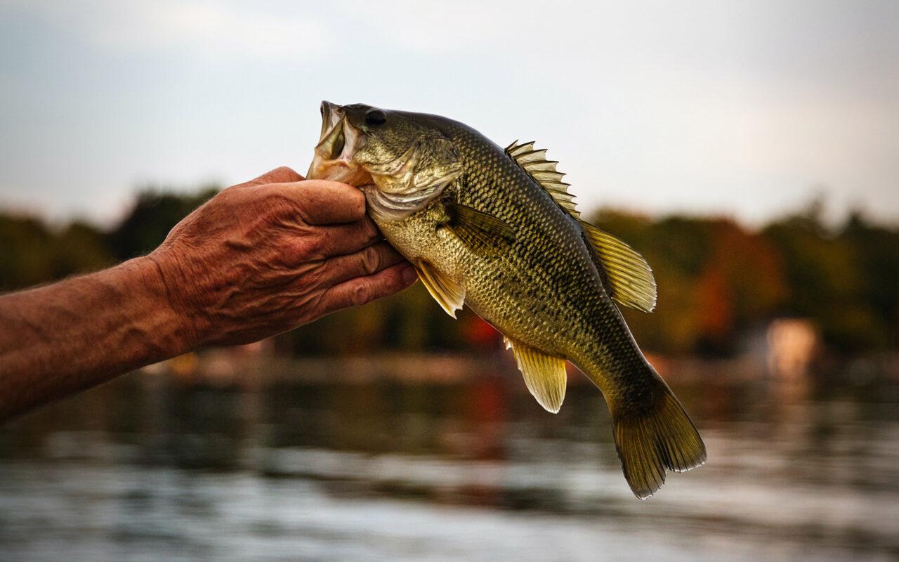 Fiske och fiskekort